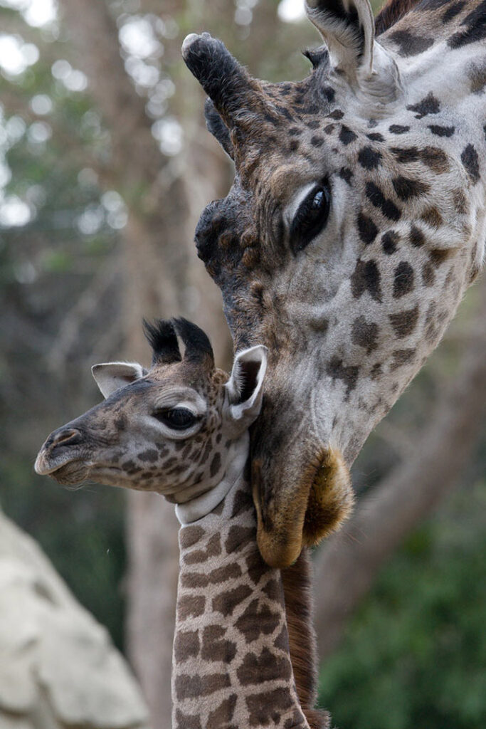 20 Top Things to Do in San Diego 2020 San Diego Zoo