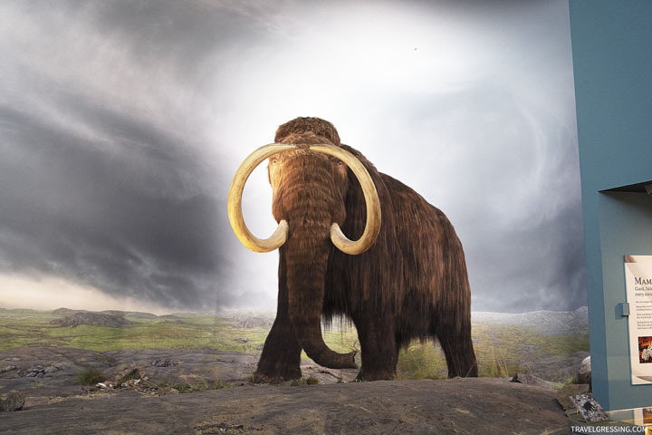 20 Top Things to Do in Victoria, BC in 2020: See the Woolly Mammoth at Royal BC Museum