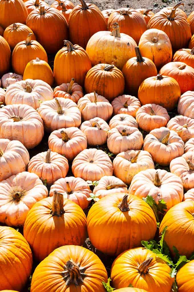 Fun Things to Do at Taves Farm in Abbotsford during the Fall