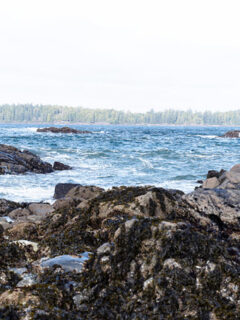 Top Things to do Tofino BC in 2021 + Where to Stay and Eat